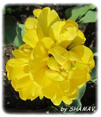 double jaune