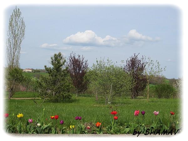 tulipes et ciel