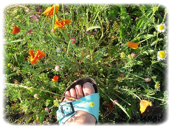 pied, sun & fleurs