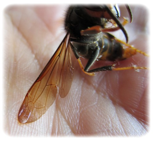 abeille 2