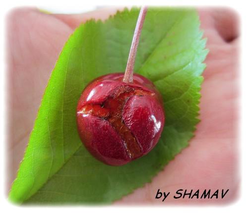 fruit abîmé