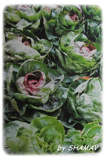 salades hh