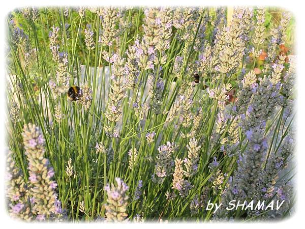 abeilles3