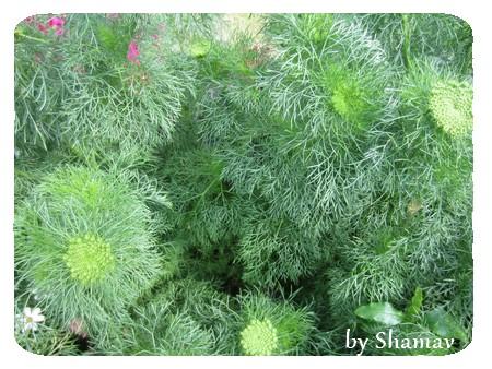 fouillis vert