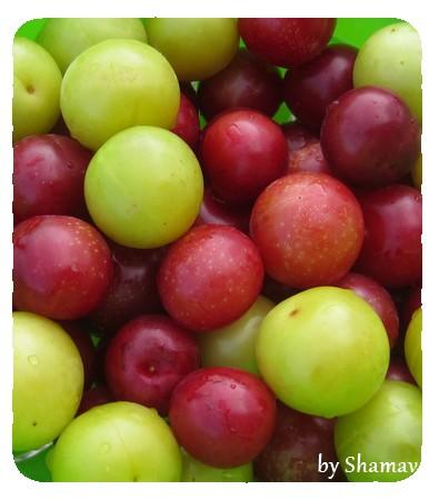 prunes2
