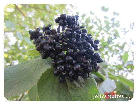 jolies noires