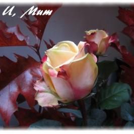 4U mum