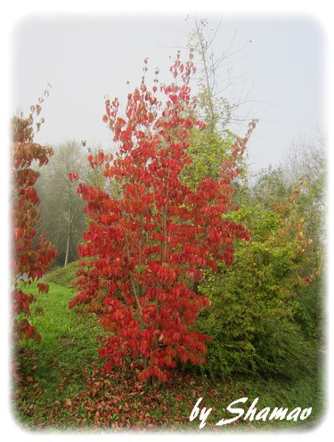 arbre rouge