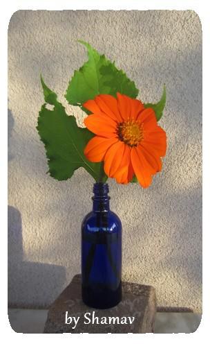 fleur coupée1