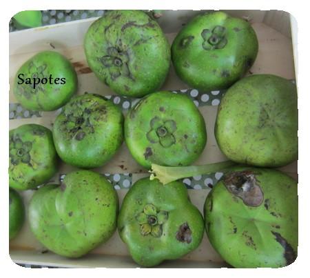sapotes