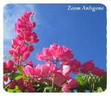 zoom Antigone