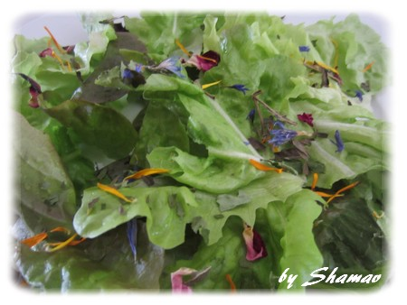 zoom salade