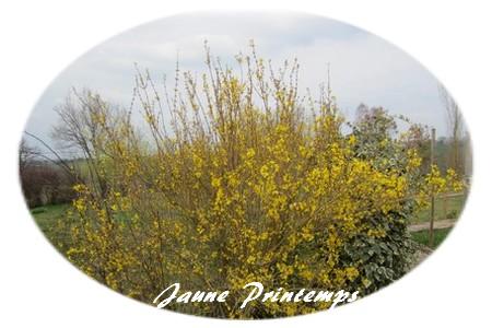 jaune printemps