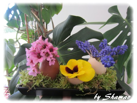 oeufs fleuris
