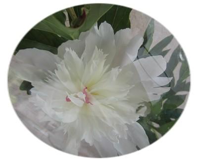 blanc tub