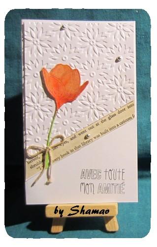 tulipe mary