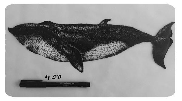 requin 22-02