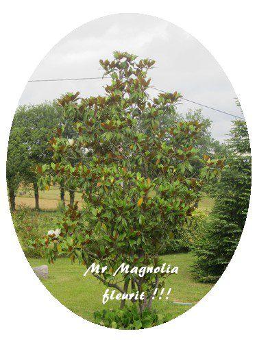 magnobis
