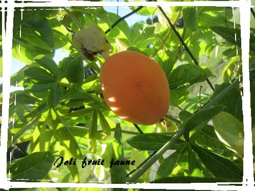 joli fruit