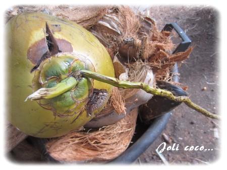 joli-coco