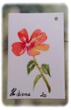 def hibiscus